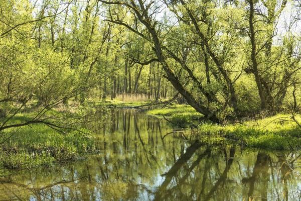Gröna Naturen